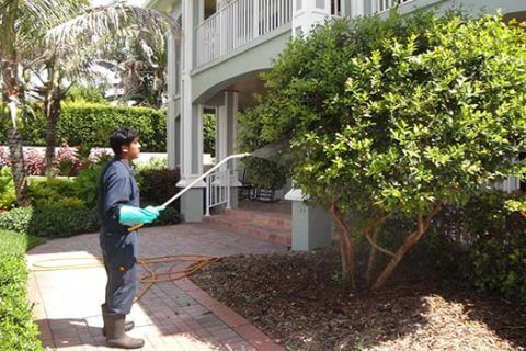 Tree Care Service in Stuart