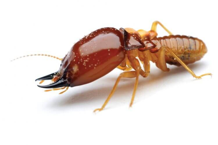 Learn about termite infestations in your home!