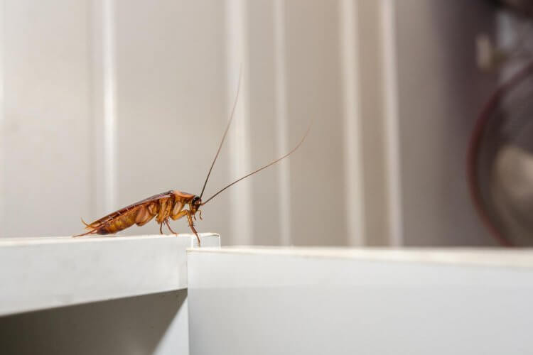 Are Palmetto Bugs Really Just Roaches?