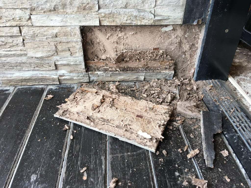 Signs You May Have A Termite Infestation Travis Pest Management