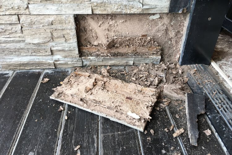Signs You May Have a Termite Infestation