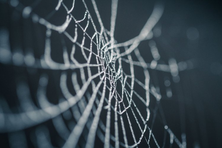What To Do When You Have a Home Spider Infestation