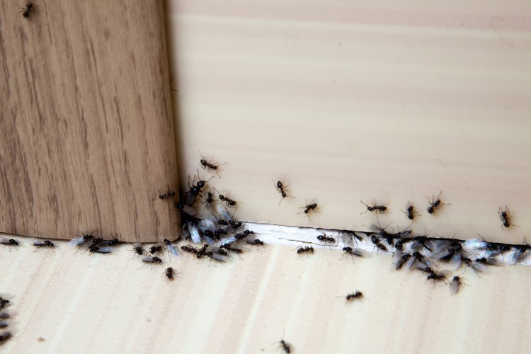 When to Call Pest Control, Stuart Fl. – Four Common Pests to Watch Out For in the Sunshine State