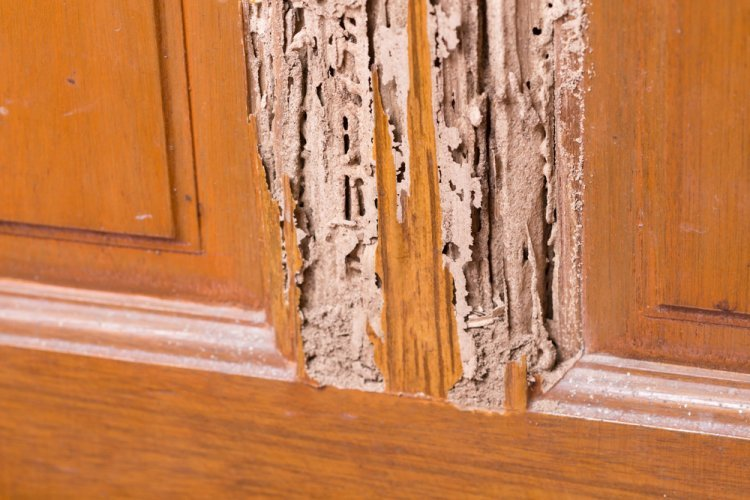The Benefits of Termite Control