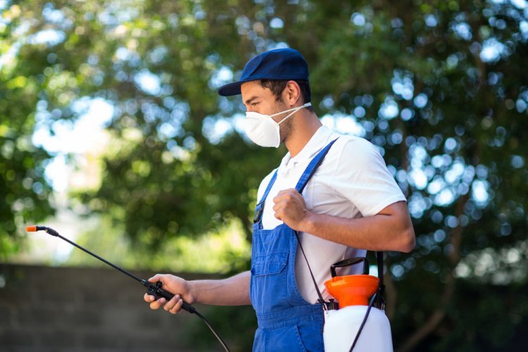 Residential Pest Control Will Save You Money and Headaches