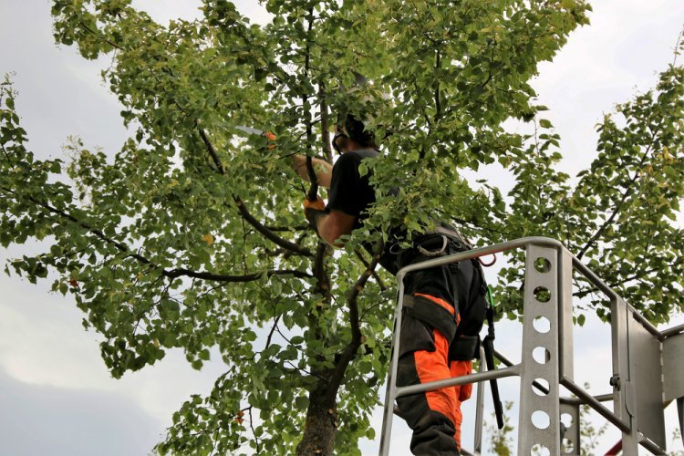 What to Expect from Tree Care Service