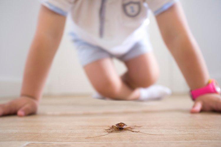 Reliable Pest Treatment