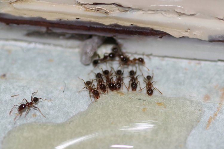 Reasons to Consider Insect Control
